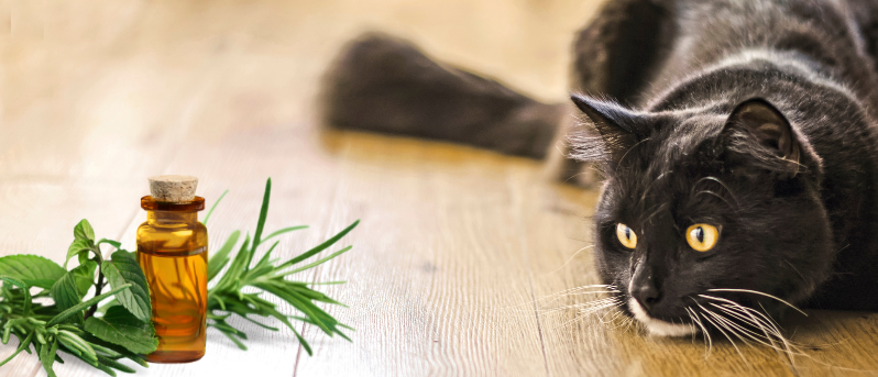 essential oils toxic for pets